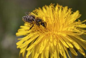 """Fotoizstāde """"Darbīgās bites"""" Ķengaragā"""